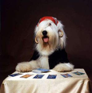 Duke the Dulux Paint Dog Gypsy by Mirrorpix