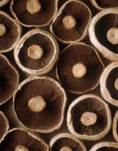 Psalliota bisporus, Mushroom by Jess Koppel