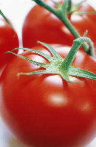 Lycopersicon esculentum, Tomato by Richard Freestone
