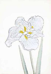 Japanese Irises I - IV, Japanese Iris II by Modern Editions