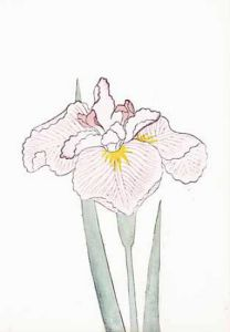 Japanese Irises I - IV, Japanese Iris IV by Modern Editions