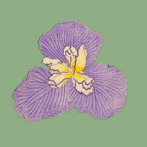 Pop Irises I - IV, Pop Iris IV by Modern Editions