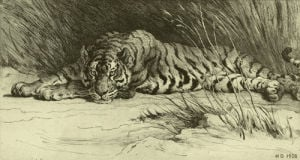 Tiger Resting by Herbert Thomas Dicksee