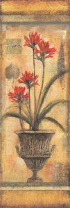Rojo Botanical VIII by John Douglas