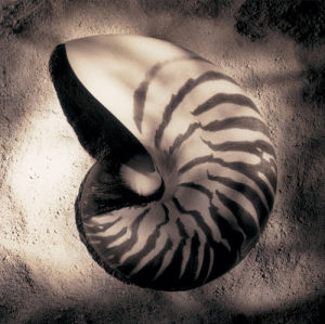 Nautilus by Laurel Wade