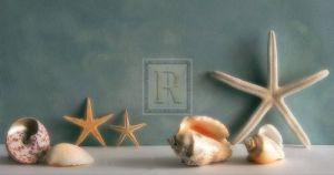Starfish IV by Bill Philip
