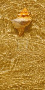 Ripple Shell IV by Tony Koukos