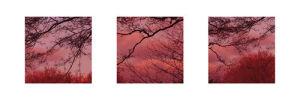 Pink Sky by Suzie Pibworth