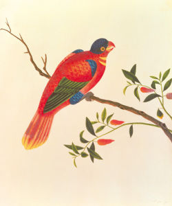 Red Parrot by Anonymous