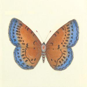 Butterfly III by Sophie Golaz