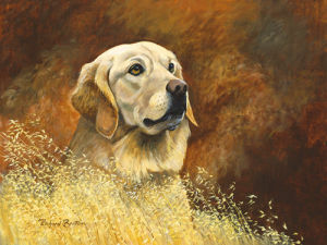 Golden Labrador by Richard Britton