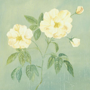 Abundant Rose II by Mimi Roberts