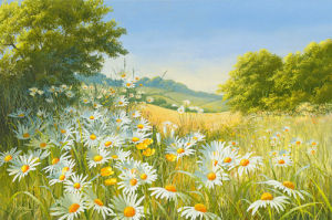 Mostly Daisies by Mary Dipnall