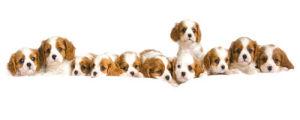Puppy Love II by Linda Wood