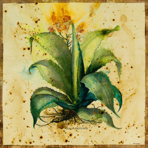 Aloe IV by Jennifer Hollack