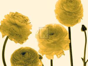 Floral Gathering by Katja Marzahn