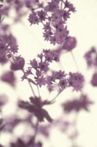 Les Memoires by Katja Marzahn