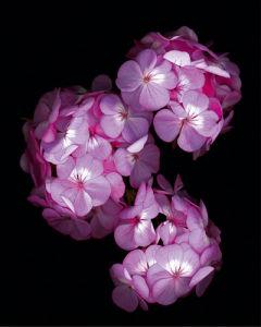 Botanical Harmonies II by Diane Lucas