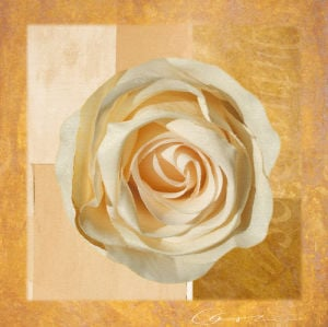 Warm Rose I by Lucy Meadows