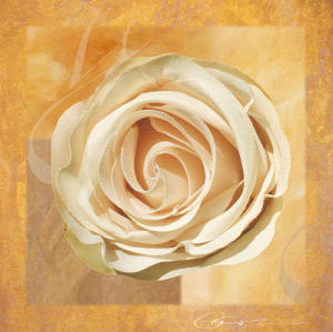 Warm Rose II by Lucy Meadows
