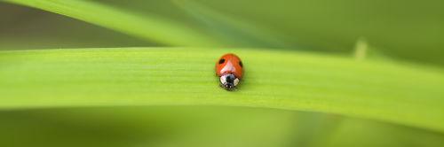 A Ladybird on a Leaf by Assaf Frank