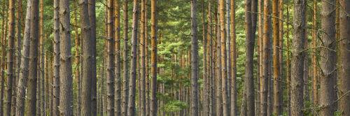 Swinley Forest Woods by Assaf Frank