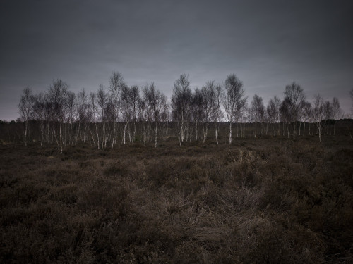 Trees in heather field with grey skies by Assaf Frank