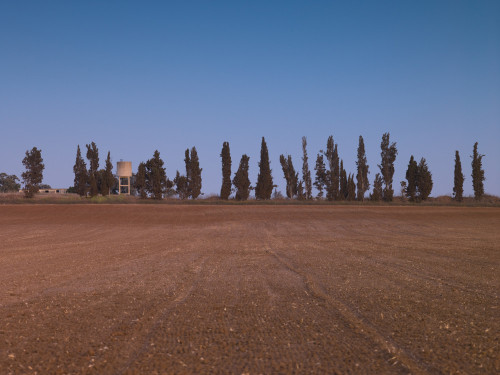 Agricultural Land and Row of Trees, Moshav Beit Hanan, Israel by Assaf Frank