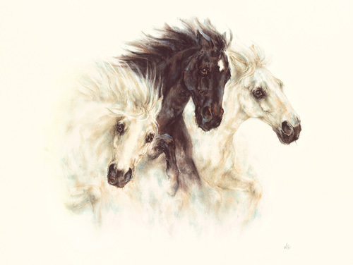 Horses by Nikki