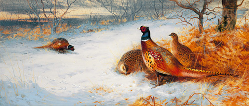 Pheasants in the Snow by Archibald Thorburn