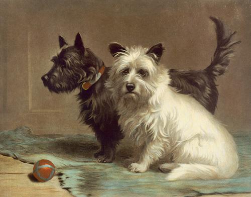 Scottie & Khaki by Margaret Collyer