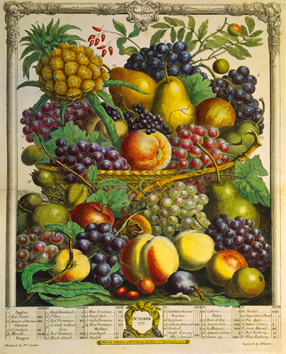 Fruits of the Season - Winter by Robert Furber