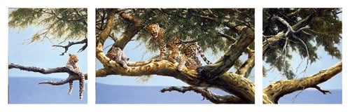 Leopard Triptych by Spencer Hodge