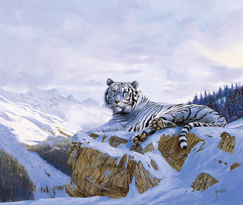 Siberian Tiger by Spencer Hodge