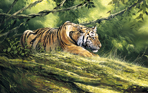 Tiger Resting by Spencer Hodge