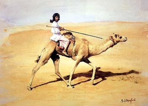 Bedouin Rider with Racing Camel by Susan Crawford