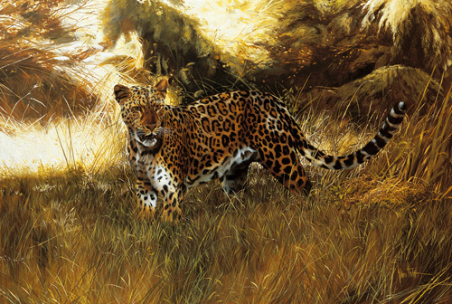 On the prowl by Spencer Hodge