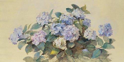 Hydrangeas by Madeleine Lemire