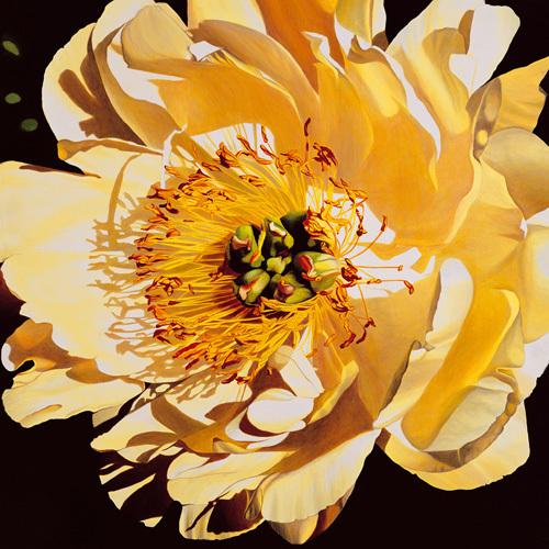 Yellow Peony by Jennifer Harmes