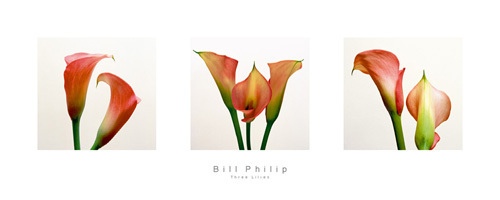 Three Lilies I by Bill Philip