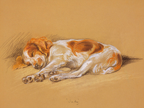 Judy, a Spaniel Puppy by Mac