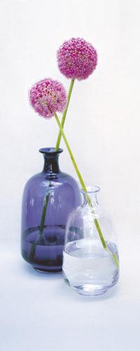 Allium I by Bill Philip