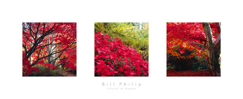 Colours of Autumn by Bill Philip