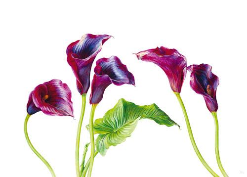 Deep Purple by Rosie Sanders