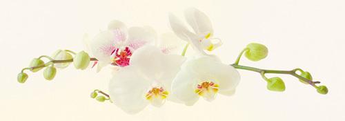 Orchidea by Katja Marzahn