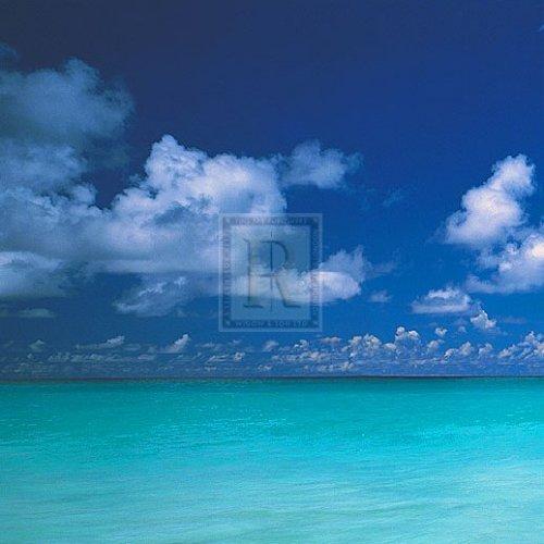 Tropical Waters III by Adam Brock