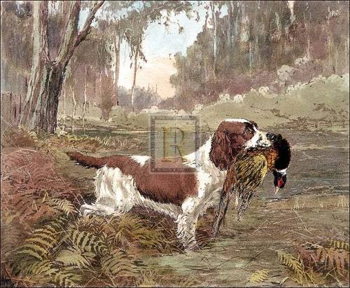 Springer and Pheasant by Ward Binks