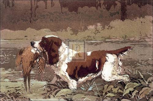 Springer and Pheasant (small) by Ward Binks