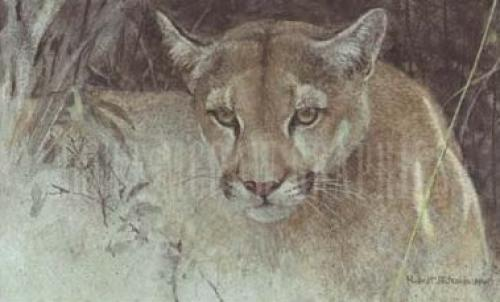 Tropical Cougar by Robert Bateman