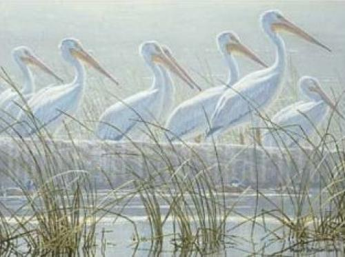 Bounty of the Wetlands (Detail) by Robert Bateman